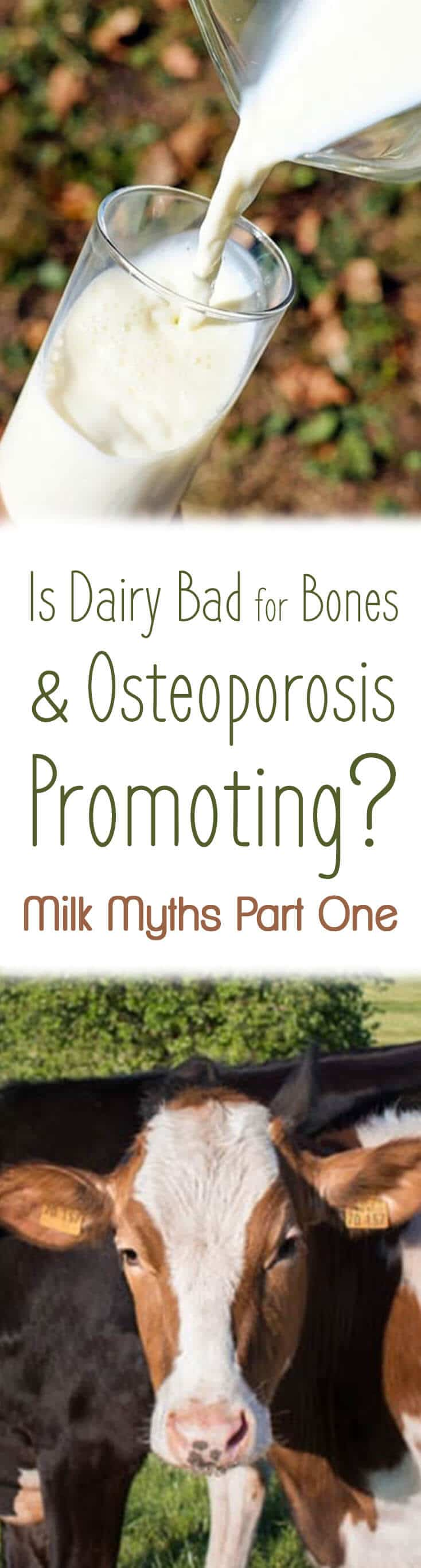 "A pinterest image of milk and cows with the text overlay ""Is Dairy Bad for Bones & Osteoporosis Promoting? Milk Myths Part One.\"""