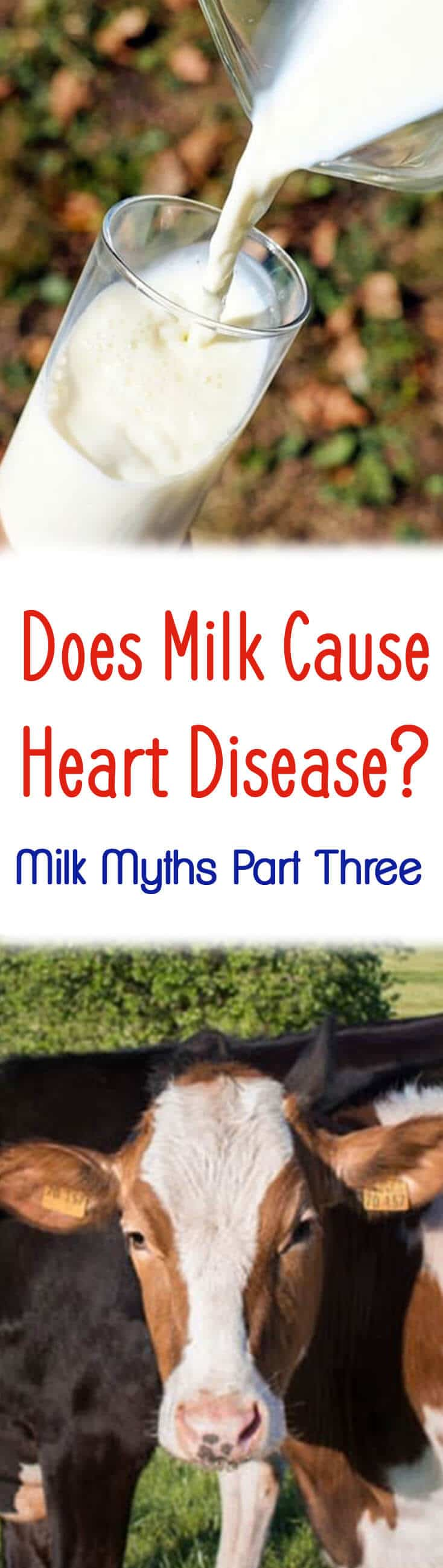 "A pinterest image of milk and cow with the text overlay ""Does Milk Cause Heart Disease? Milk Myths Part Three.\"""