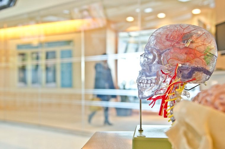 sculpture of a brain