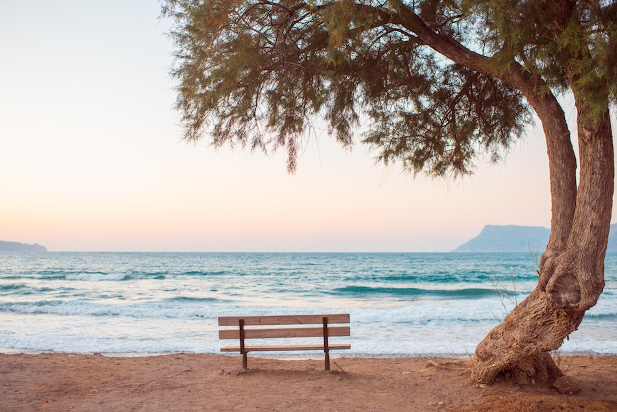 Bench next to a tree and beach.