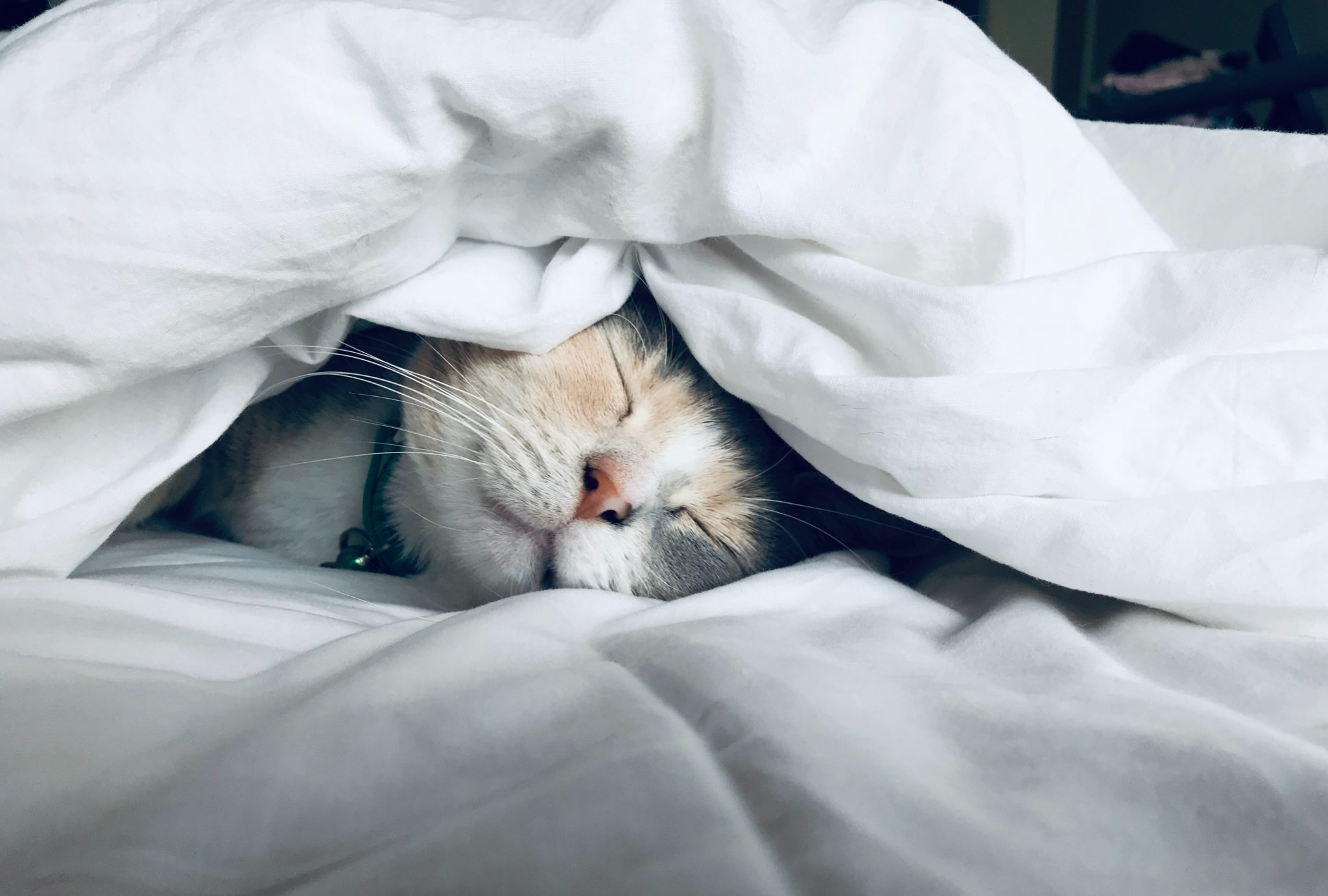 image of cat sleeping under white bedsheets