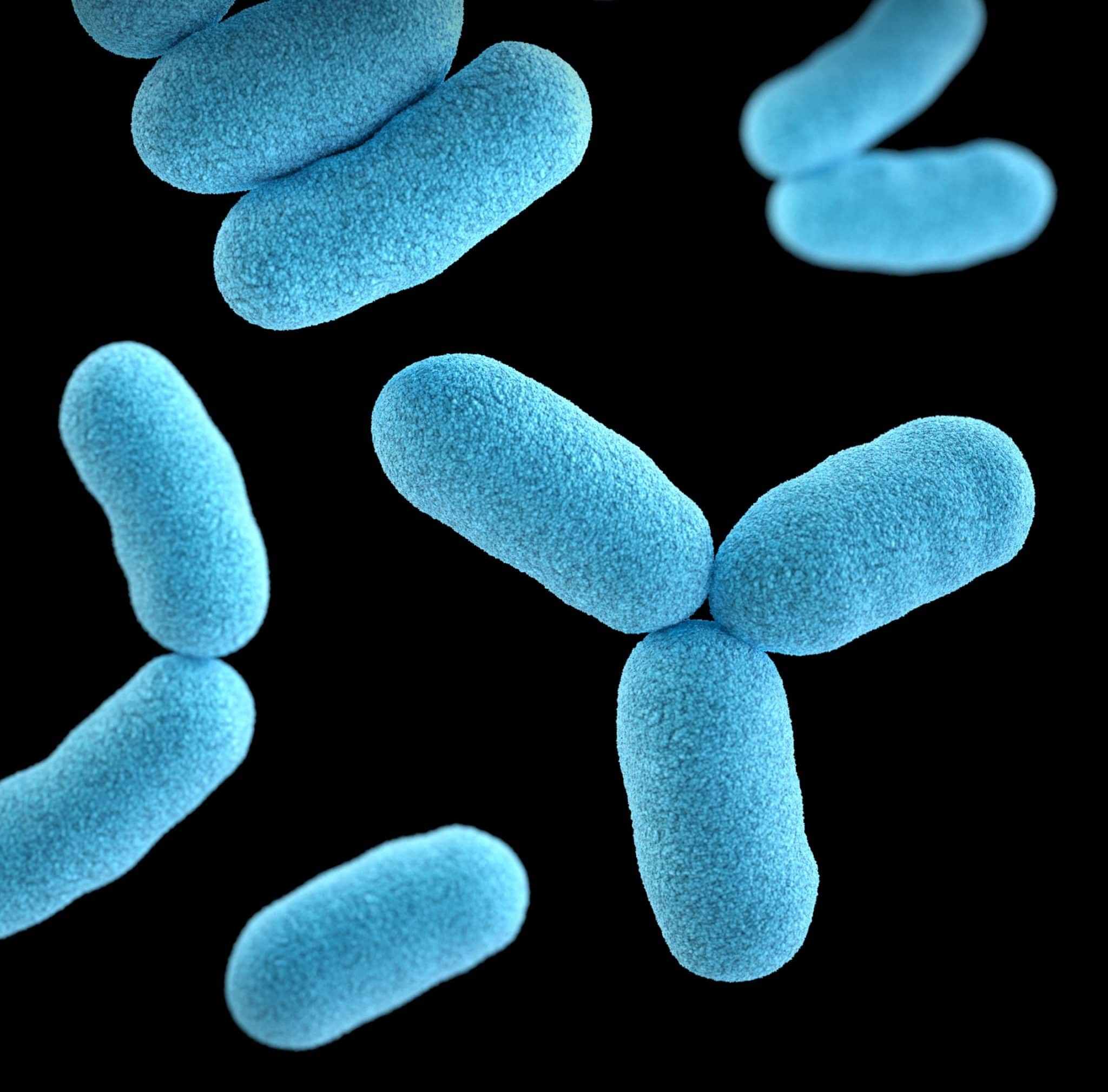 close up of blue gut bacteria against a black background