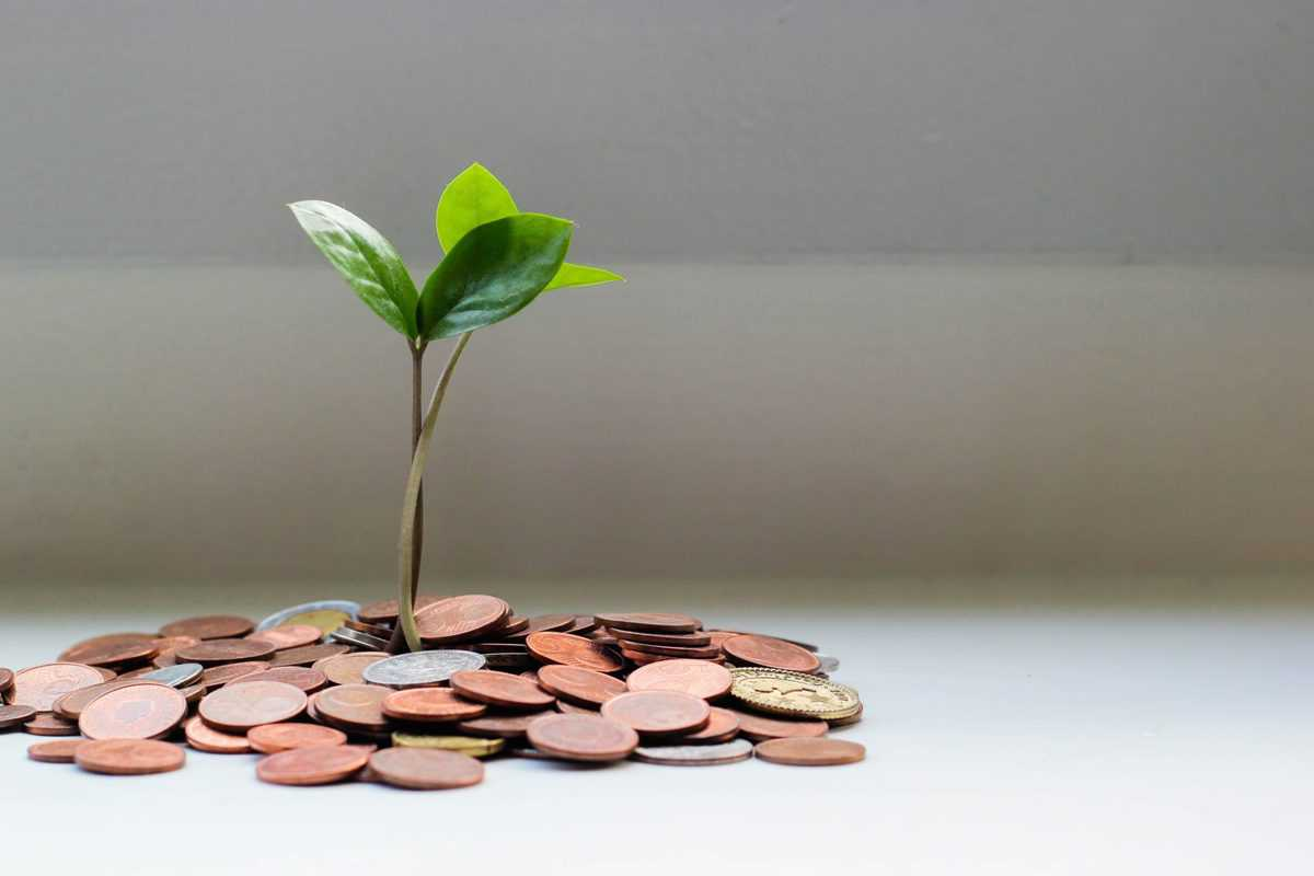 image of a plant growing from a pile of coins to plan for financial future