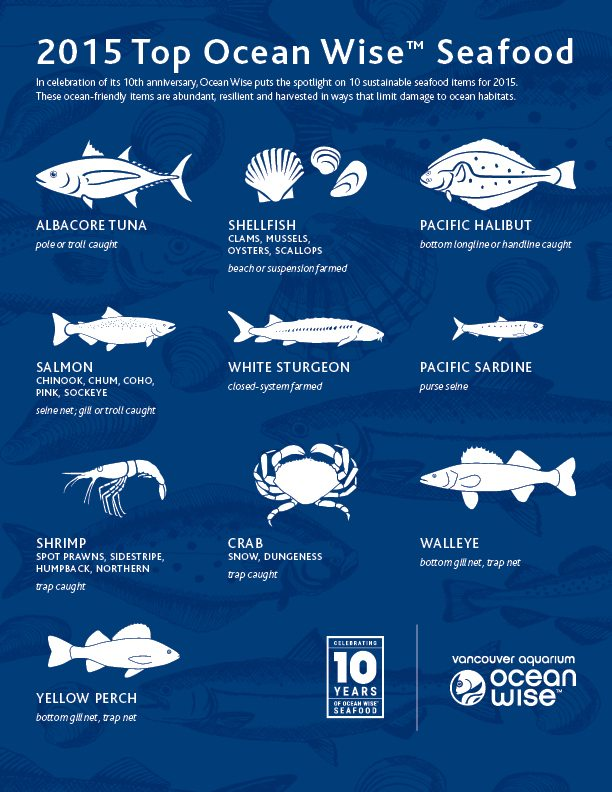 OceanWise_Top10Seafood_150310-screen.jpg