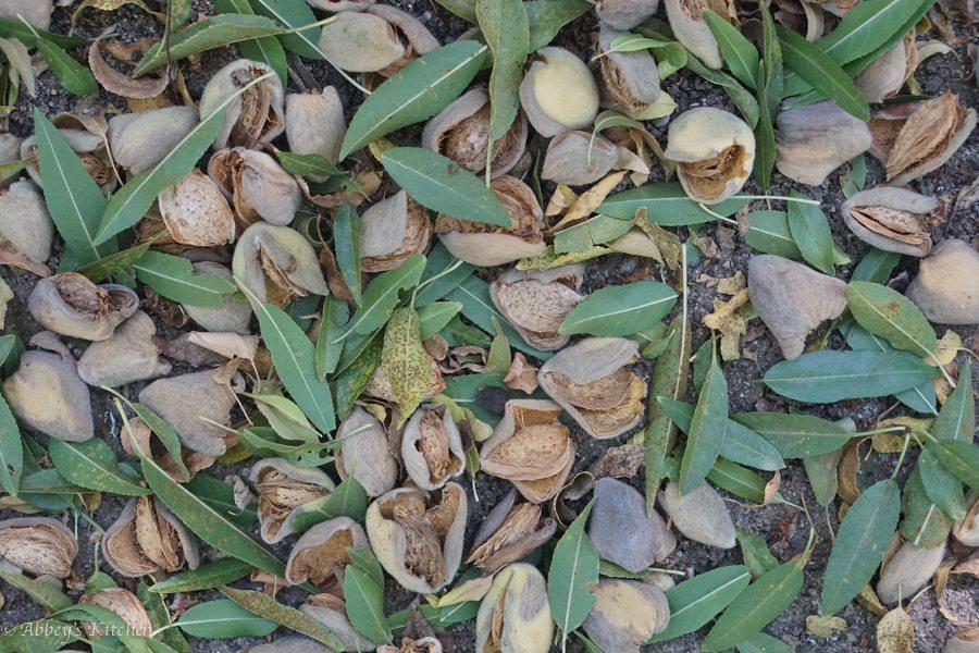 almond_california_drought_6_of_10_1.jpg